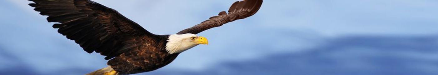 eagle-W
